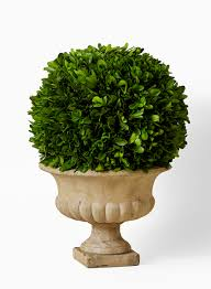 Preserved Boxwood Ball In Urn