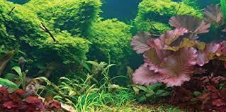 Aquarium Backgrounds Amazon Com Sporn Aquarium Background Static Cling Tropical 24