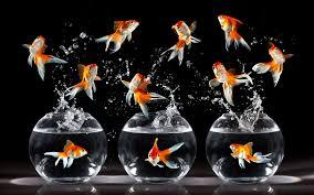HD Aquarium HD Wallpaper 3d 1080p Smart ...