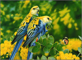 Laptop Jpg - Beautiful Yellow Birds Hd ...