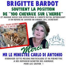 """Résultat de recherche d'images pour """"photo de brigitte bardot refuge"""""""