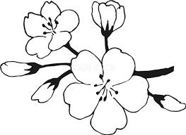 桜の花ソメイヨシノ無料 白黒イラスト83168 素材good