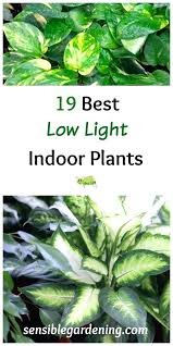 office plants no light. Low Light Plants Best Indoor With Sensible Gardening Liven Up Those Dark Corners . Office No