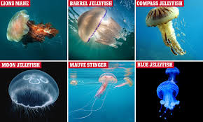 Which Species Of Jellyfish Are The Most Dangerous For