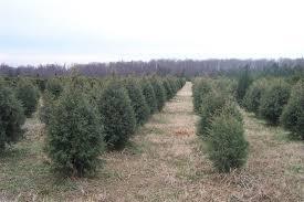 Penland Christmas Tree Farm