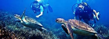real underwater world. Simple World Mauritius Underwater Excursions And Real World E