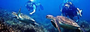 Mauritius Underwater Excursions Underwater Excursions in Mauriius