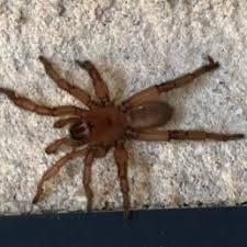 Spider Identification Chart Arkansas Spiders In Arkansas Species Pictures