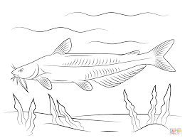 Small Picture Blue Catfish coloring page Free Printable Coloring Pages