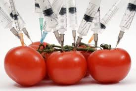 Imagini pentru omg organisme modificate genetic