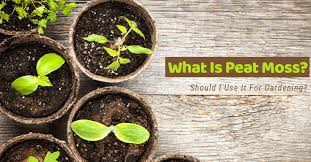 what is peat moss should i use it for gardening