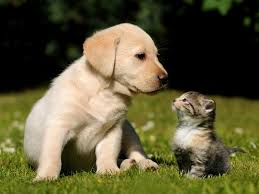 cute puppies and kittens. Delighful Puppies Inside Cute Puppies And Kittens D