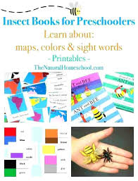 Worksheets For Kindergarten Insect Worksheets Unit Page Packet Den ...