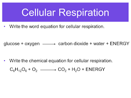 9 cellular respiration write the word equation for