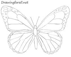 drawing butterfly pictures. Plain Drawing Butterfly Drawing Throughout Drawing Butterfly Pictures W