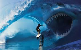 shark attack wallpaper. Beautiful Shark 24 Shark Attack Surfer Viehd HD Wallpapers 845  Hd  Desktop Background In Wallpaper T