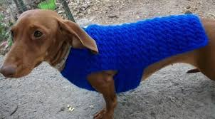 Free Knitted Dog Sweater Patterns Inspiration Crochet Dog Sweater Patterns You Your Pup Will Love