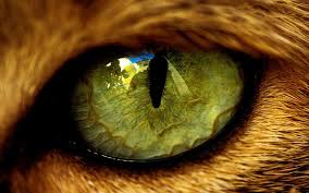 Angry Tiger Eyes Wallpapers ...
