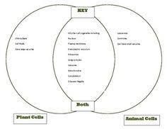 Venn Diagram On Plant And Animal Cells Venn Diagram Of Cell Organelles Wiring Diagram