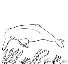 New Images Of Dolphin Coloring Pages Pdf With Stickers At Coloring Page