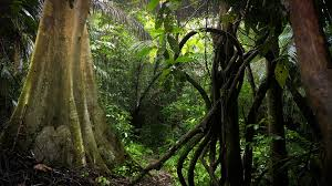 jungle background. Interesting Jungle Scenic Jungle Rainforest Nature Background Asian Lush Forest Wilderness  Flora Stock Video Footage  Videoblocks On Jungle Background U