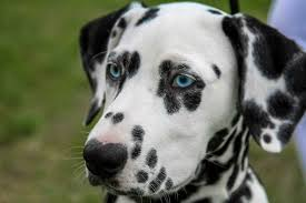 70 Unique Names for <b>Dogs</b> With Spots | PetHelpful