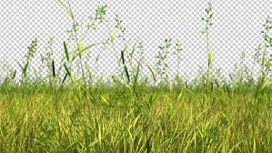 green grass field. Fine Green Grass Field Loops With Alpha Channel 2 Version Included   Original Zdepth Version Sky Is Not In Green I