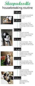 Puppy House Training Chart House Training Routine Tips And Discipline Sheepadoodles Org