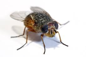 Small Black Flies In Kitchen Why Bugs Ruin Everything Wait But Why