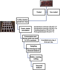 Coffee Production Process Flow Chart Improvement Of Coffee Beverage Quality By Using Selected