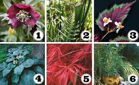 Small Picture Container Gardens Made for the Shade Garden Design