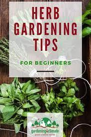 basic herb garden herb gardening tips