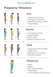 Pregnancy Stomach Measurement Chart Pregnancy Trimesters Everything You Need To Know