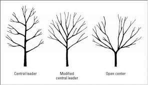 A Guide To Pruning Fruit Trees U2013 Concepts App U2013 MediumPrune Fruit Tree