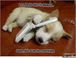 Funny-puppy-memes-tumblr (3) - EWallpapersonline via Relatably.com
