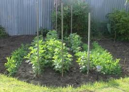 garden design with organic vegetable garden vegetable gardening tips with backyard kitchen ideas from organicveggiepatch