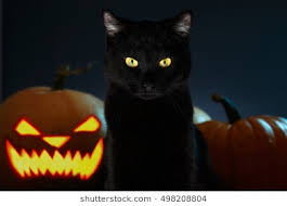 halloween black cat. Perfect Halloween Portrait Of Black Cat With Halloween Pumpkin On Background And Scary Spooky  Eyes Creepy Horror On H