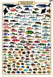 Fishwatchers Guide Indian Ocean Western Australia
