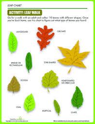 Parts Of A Plant Lesson Plan Education Com Lesson Plan