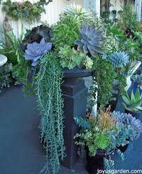 Clever Plant Container Ideas  The Micro GardenerSucculent Container Garden Plans