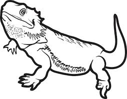 Small Picture Free Printable Lizard Coloring Page for Kids 5