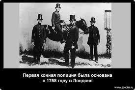 Познавательные факты про лошадей фото научные факты о конях в  Интересные факты про лошадей