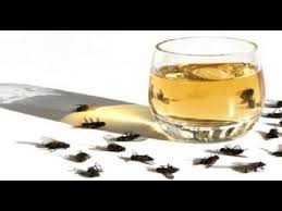 how to get rid of flies quickly inside and outside you