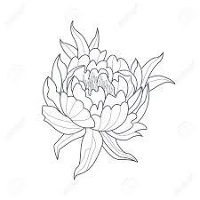 牡丹の花白黒図面帳手描きベクトル シンプルなスタイルのイラストを着色するため