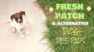 dogs bathroom grass. fresh patch alternative dogs bathroom grass