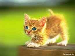 Cute Kittens Wallpapers - Wallpaper Cave