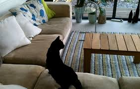 how to get rid of pet cat urine smell from your sofa and carpet