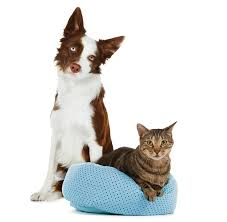 petsmart animals dogs.  Animals Adopted Pets And Petsmart Animals Dogs R