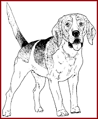 Valuable Dogs To Color Obsession Printable Boxer Dog Coloring Pages