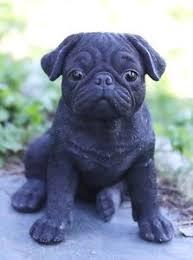 black pug puppies. Brilliant Black Image Is Loading SITTINGBLACKPUGPUPPYREALISTICLIFELIKESTATUE In Black Pug Puppies EBay
